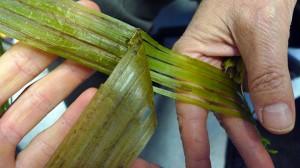 Stinging Nettle Fiber